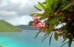 Thiên đường trong quần đảo Virgin