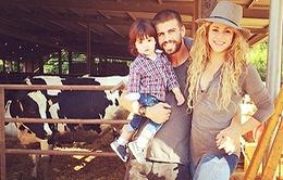 Shakira mang thai lần 2