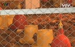 Hải Phòng: Xây dựng làng chăn nuôi theo chuỗi an toàn thực phẩm