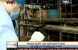 Trung Quốc: Gia cầm của hộ gia đình có thể là nguồn lây nhiễm H7N9