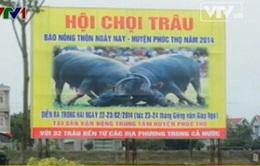 Lần đầu tiên Hà Nội tổ chức hội chọi trâu