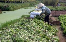 """Điệp khúc """"được mùa mất giá"""" ở làng trồng rau VietGap"""