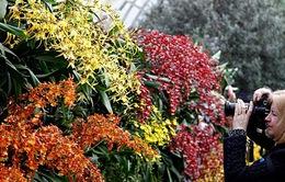 Hàng nghìn loại hoa lan khoe sắc tại New York