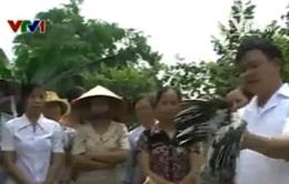 Vĩnh Phúc: Cả làng đi học phòng chống dịch cúm gia cầm