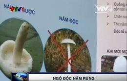 Cảnh báo các loại nấm chứa độc tố cao