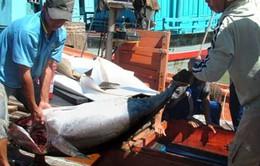 Tăng trưởng xuất khẩu thủy sản, mức sống ngư dân có nâng lên?