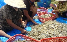 Thương lái nước ngoài gây hại nông - thủy sản