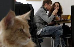 Thư giãn với Café mèo tại London