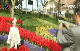 Lễ hội hoa tulip tạo cơ hội việc làm tại Thổ Nhĩ Kỳ
