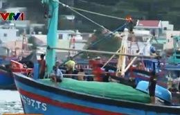 Ngân hàng dành 10.000 tỷ đồng cho vay đóng mới tàu đánh bắt