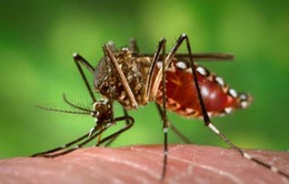Đề phòng biến chứng của sốt xuất huyết