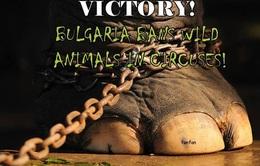Cấm biểu diễn xiếc thú tại Bulgaria từ năm 2015