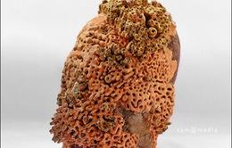 Sắc màu điêu khắc gốm tại Hà Nội