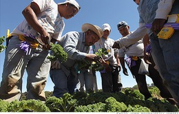 Doanh nghiệp Mỹ kêu gọi cải cách Luật nhập cư