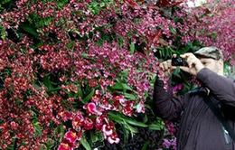 New York: Hơn 3000 loài hoa lan khoe sắc tại triển lãm hoa