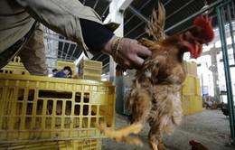 Đã có 10 ca nhiễm cúm H7N9 tại Trung Quốc