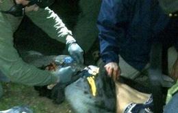 Công bố video bắt giữ nghi phạm đánh bom ở Boston
