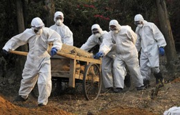 Cúm gia cầm bùng phát ở Triều Tiên