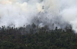 Indonesia bắt giữ hai nghi phạm gây cháy rừng