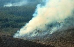 Indonesia: Mưa đã rơi tại khu vực xảy ra cháy rừng
