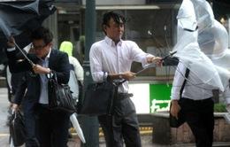 14 người thiệt mạng do bão Wipha ở Nhật Bản
