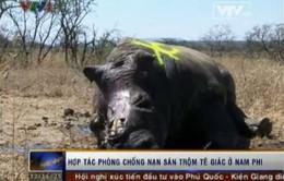 Người Việt Nam cũng tham gia buôn lậu sừng tê giác ở Nam Phi