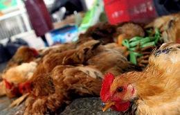 Trung Quốc: Thêm một ca nhiễm cúm gia cầm H7N9