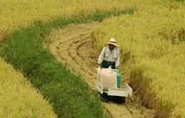 Nhật Bản xóa bỏ trợ cấp gạo