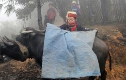 Cao Bằng và Lạng Sơn hạn chế gia súc chết rét
