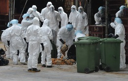 Hong Kong: Ca nhiễm virus cúm gia cầm H9N2 đầu tiên sau 4 năm