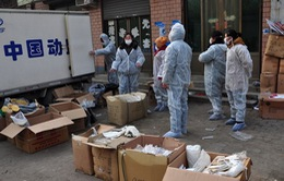 Trung Quốc: Bùng phát dịch cúm A/H5N1 tại Quý Châu