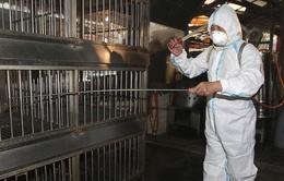 Trung Quốc: Tiếp tục gia tăng ca nhiễm virus H7N9
