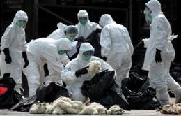WHO: Trung Quốc cần theo dõi sát sao dịch cúm gia cầm