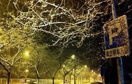 Bắc Kinh đón đợt tuyết đầu tiên trong mùa đông năm nay
