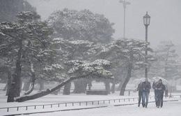 Nhật Bản tê liệt vì bão tuyết