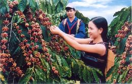 Quyết định thu hồi thương hiệu cà phê Buôn Ma Thuột tại Trung Quốc