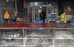 Trung Quốc mở cửa trở lại chợ gia cầm Quảng Châu