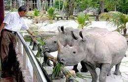 Hợp tác Việt Nam - Nam Phi ngăn chặn buôn bán trái phép tê giác