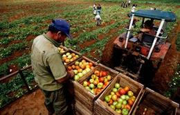 Cuba – EU kết thúc đàm phán về cải thiện quan hệ