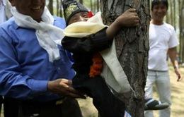 Nepal: Hơn 2.000 người ôm cây để thiết lập kỷ lục thế giới