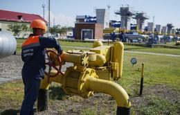 Nga đồng ý nối lại đàm phán về khí đốt với Ukraine