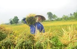 Hội nghị tổng kết thí điểm 3 năm triển khai bảo hiểm nông nghiệp