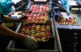 Nga cấm vận nông sản từ phương Tây: Ai là người hưởng lợi?