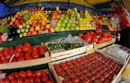 Lệnh cấm của Nga tác động đến xuất khẩu nông sản của Bỉ