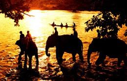 Buổi sáng đầu tiên: Du lịch Tây Nguyên - Tiếng gọi từ đại ngàn