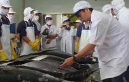 Nhân rộng mô hình sản xuất cá ngừ đại dương theo chuỗi giá trị
