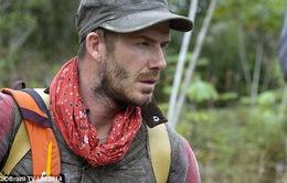 David Beckham thú nhận sợ hãi trước thiên nhiên hoang dã