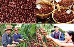 VIDEO: Chiến lược nào cho cà phê Việt Nam?