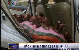 Bắc Ninh: Bắt giữ 300 gà thịt Trung Quốc nhập lậu
