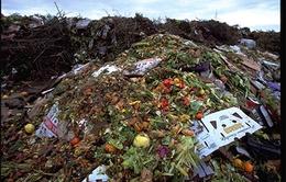 Thế giới lãng phí 1,3 tỷ tấn thực phẩm mỗi năm